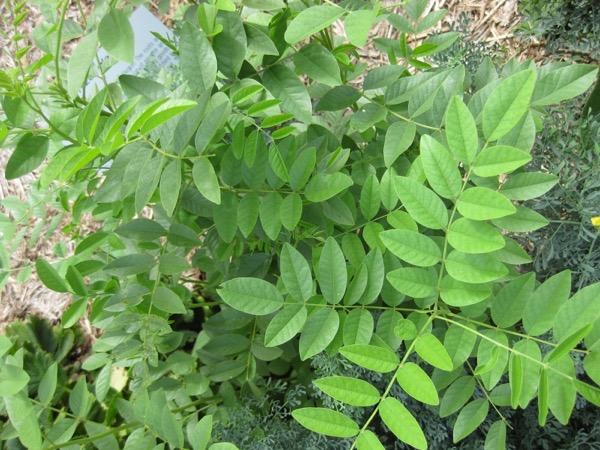 Aromatiques, médicinales, tinctoriales… les plantes et le maraîchage bio en formation